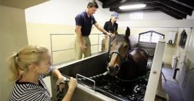 Gyógyfürdő lovaknak