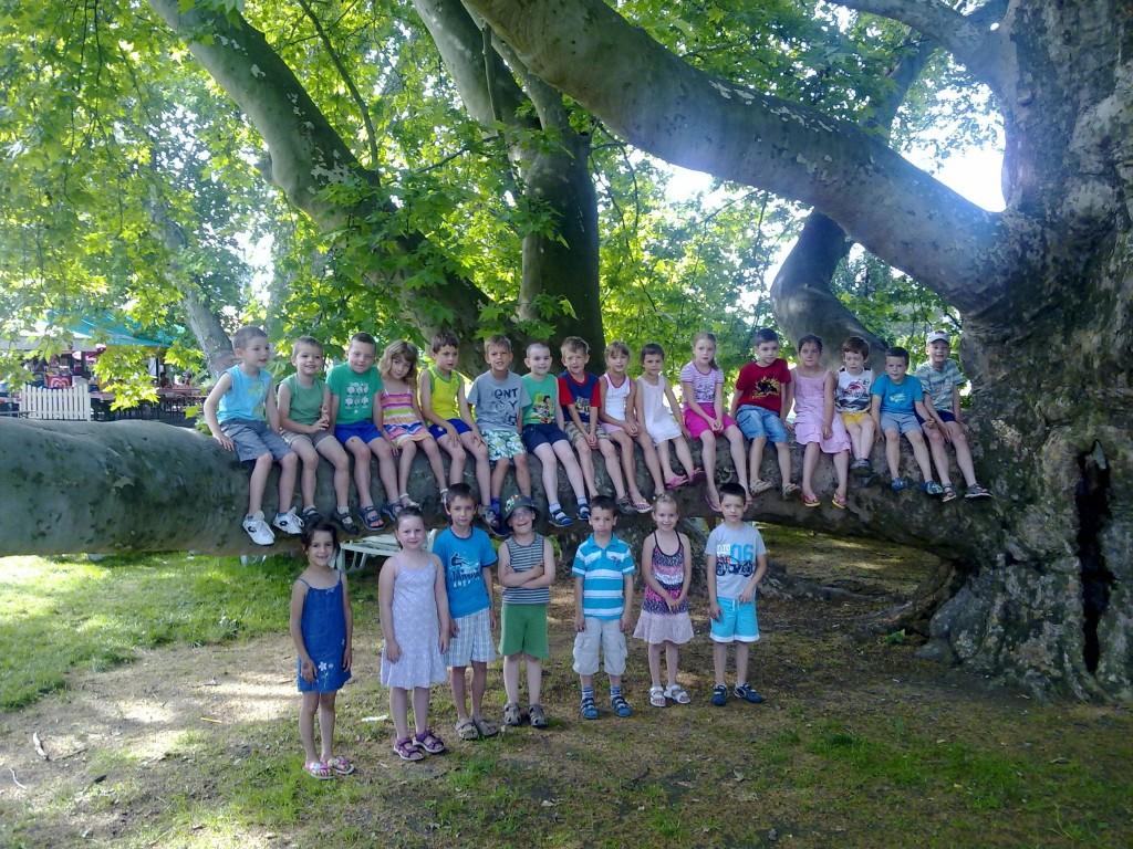 platánfa az Egri Termálfürdőben