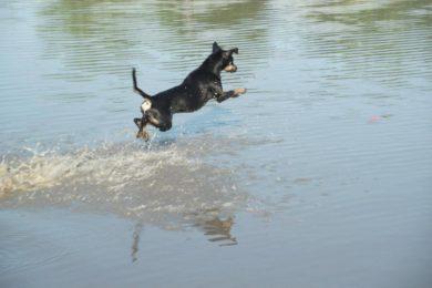 Termáltóban fürödhetnek a kutyák