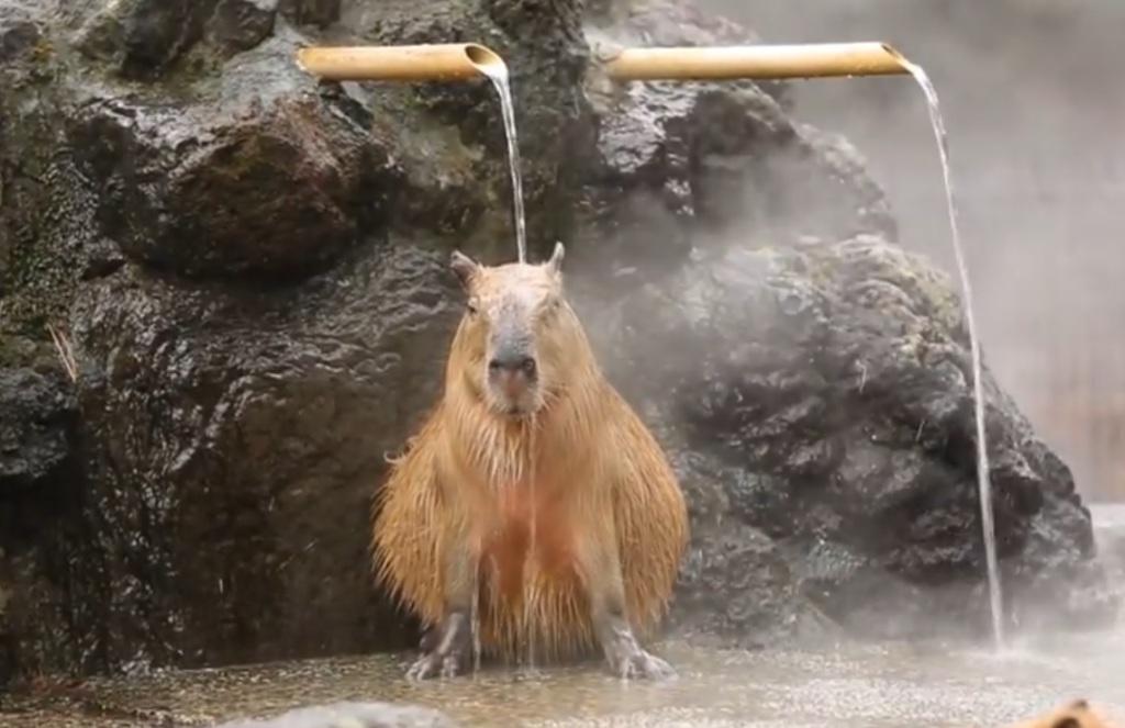 Vízidisznó termálfürdő