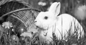 Húsvét a termálfürdőkben: rengeteg program lesz