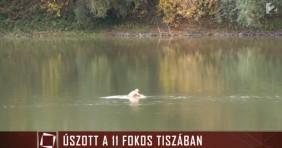 A termálfürdő ellentéte: fürdés a hideg Tiszában