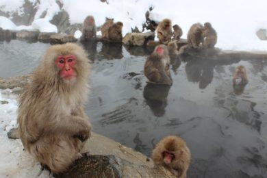 Stresszcsökkentő praktika, amit elleshetünk a majmoktól