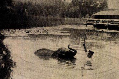 Színész kutya és elefánt is gyógyult már Hévízen