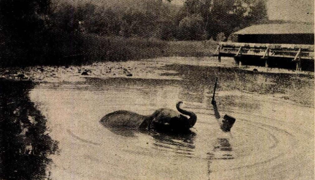Nelly elefánt Hévíz