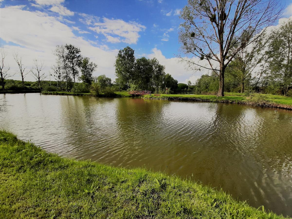 Penészlek tó
